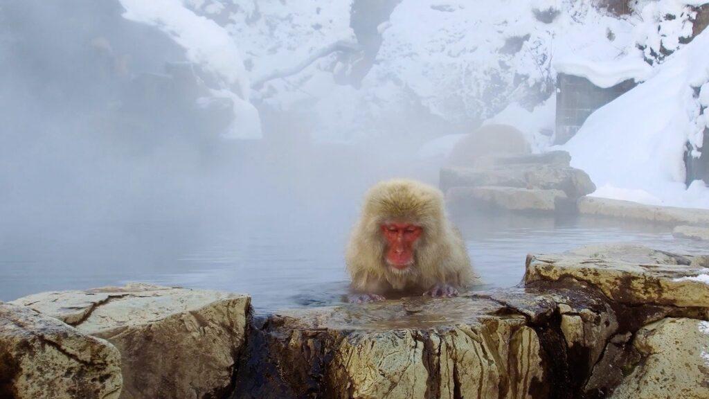 日帰り温泉を気軽に利用して心身の疲労をリセットしている